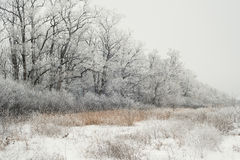 Tree in snowy field Royalty Free Stock Photos