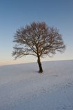 Tree on snowy hillside Stock Photos