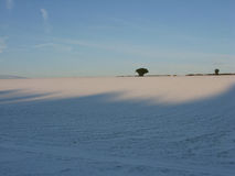 Tree on a snowy horizon. A tree against a blue sky on top of a snowy field Stock Photo
