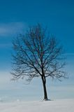 Tree in snowy landscape Royalty Free Stock Image