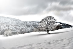 Tree in snowy landscape Royalty Free Stock Photos