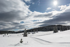 Tree on a snowy meadow. Trees on a snowy meadow with cross country skiing tracks around them Royalty Free Stock Image