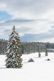 Tree on a snowy meadow. Tree growing on a snowy meadow with ski tracks running pass it Stock Image