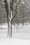 Tree in Snowy Park Scene. Stock Photos