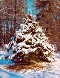 Tree in snowy park. Winter day. Tree in snowy park Stock Photos