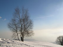 Tree in snowy Winter landscape. Scenic view of bare branched tree in snowy Winter landscape with blue sky background Stock Images