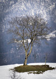 Tree in snowy Winter landscape Stock Images