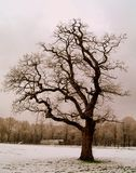 Tree in snowy winter park. Scenic view of bare branched tree in snowy winter park Stock Photography