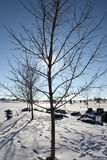 Tree in a snowy winter park Stock Images
