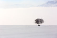 Tree in soft,tranquil environment in winter time Stock Photo