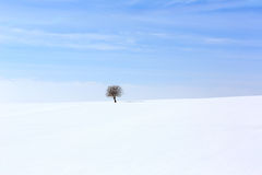 Tree in soft,tranquil environment in winter time Stock Image