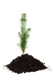 Tree in Soil Stock Photos
