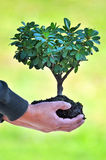 Tree and Soil in Man's Hands. Over out of focus green background Stock Photography
