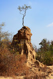 Tree on soil pillar, Sao Din Na Noi in Nan province, Thailand Royalty Free Stock Photo