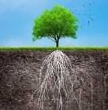 A tree and soil with roots and grass royalty free stock photography
