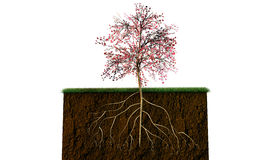Tree on a soil section Stock Image