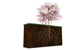 Tree on a soil section Royalty Free Stock Photos