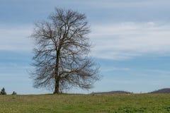 Tree. Solitary tree on hill near Rome Stock Photos