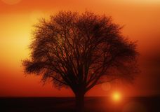 Tree, Solitary, Sunset Royalty Free Stock Photo