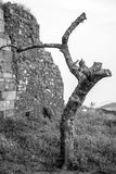 A tree in a solitude remote place near a old wall. Stock Photography
