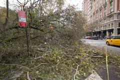 Tree som avverkas av Orkan Sandig, Manhattan Arkivbilder