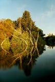 Ord flod Fotografering för Bildbyråer