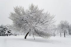 Tree som täckas i Snow Royaltyfri Foto