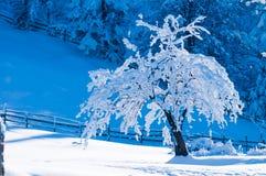 Tree som täckas med insnöad vinter Arkivfoto