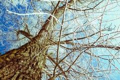 Tree som täckas vid en insnöad vinter Arkivbilder