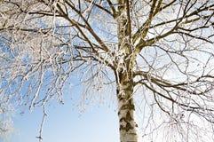 Tree som täckas vid en insnöad vinter Arkivfoton