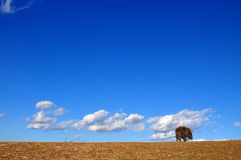 A tree, some brown, a huge blue and a piece of white cloud. Nice view of a lonely tree Stock Photos