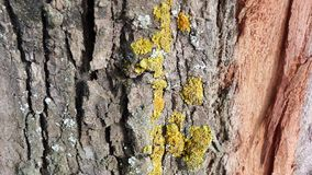 Tree with moss. A tree with some moss Stock Image