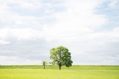 Tree. In sommer. landscape natur green Royalty Free Stock Images