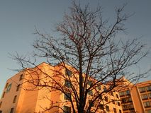 Tree, South Bay Center, Dorchester, Massachusetts, USA. Tree at dusk in front of a building, located near South Bay Center, in Dorchester, Massachusetts, USA Stock Photos