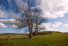 Tree on South Downs Royalty Free Stock Photos