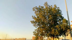 Tree in south jeddah at morning stock video footage