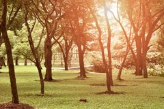 Tree species in the park in thailand. / At afternoon / So beautiful Stock Photo