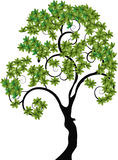 Tree with spiral branches. A decorative tree with a black trunk, spiral branches and lots of green leaves Royalty Free Stock Images