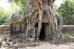 Tree  splitting and retaining entrance walls Stock Photography