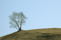 Tree in spring. On a mountain Stock Photos