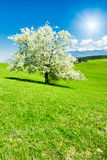 Tree in the spring stock image