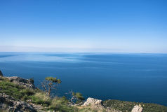 A tree in spring against the blue sea. A tree standing on the brink of the precipice against the Black Sea in spring Royalty Free Stock Image