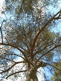 Tree in Spring Stock Image