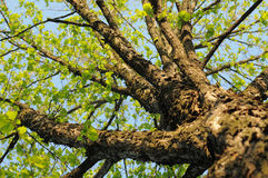Tree Stock Photo