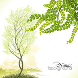 Tree in Spring Royalty Free Stock Photo