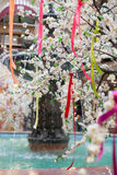 Tree spring blooms white flowers Pink. Ribbon Stock Photography