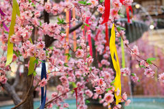 Tree spring blooms white flowers Pink Stock Images