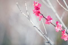 Tree in spring blossom Stock Photos