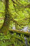 Tree in spring with brilliant green moss and plants Stock Image