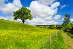 Tree on spring field Royalty Free Stock Photo